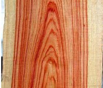 Tulip-Wood.jpg